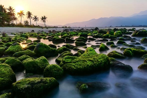 Voọc chà vá chân nâu áp đảo cuộc thi ảnh môi trường Đà Nẵng - Ảnh 9.