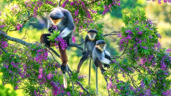 Voọc chà vá chân nâu áp đảo cuộc thi ảnh môi trường Đà Nẵng - Ảnh 5.