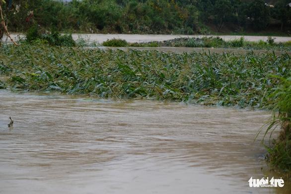 Xả lũ cấp tập trong đêm, hơn 350ha vùng rau Đà Lạt hư hại - Ảnh 2.