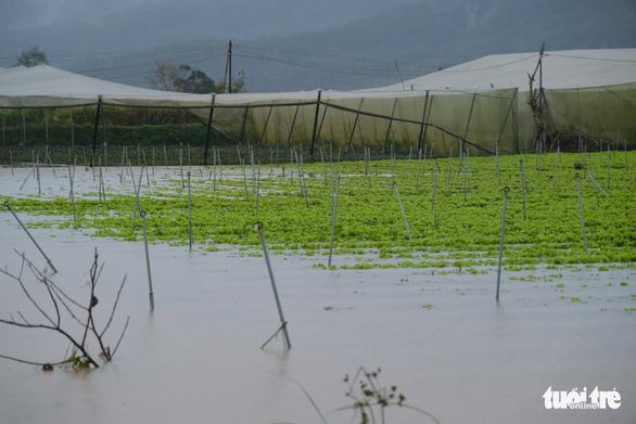 Xả lũ cấp tập trong đêm, hơn 350ha vùng rau Đà Lạt bị thiệt hại - Ảnh 1.