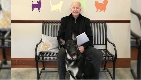 Ông Biden bị trẹo chân vì chơi với chó cưng Major - Ảnh 1.