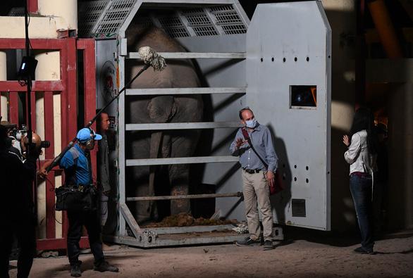 Chú voi cô đơn nhất thế giới đến nhà mới ở Campuchia - Ảnh 1.