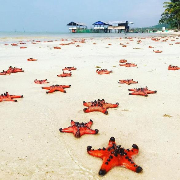 Tour Phú Quốc từ TP.HCM dưới 3 triệu đồng câu cá, lặn ngắm san hô - Ảnh 1.