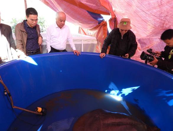 Xét nghiệm gen xác nhận rùa ở hồ Đồng Mô thuộc loài rùa Hoàn Kiếm - Ảnh 2.