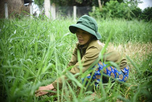 Báo Tuổi Trẻ cùng GreenFeed trao 920 triệu đồng vốn cho nông dân Bình Định - Ảnh 1.