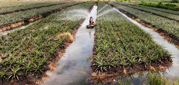 Tây Ninh hướng tới phát triển nông nghiệp công nghệ cao bền vững - Ảnh 2.