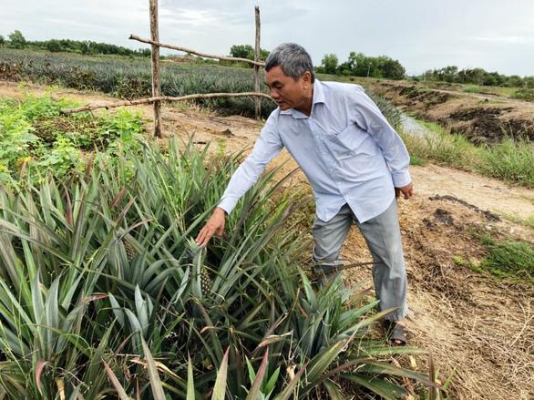 Tây Ninh hướng tới phát triển nông nghiệp công nghệ cao bền vững - Ảnh 1.