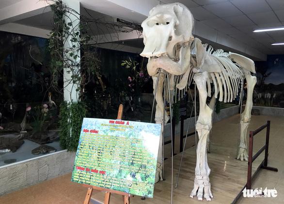 Những động vật bất tử ở Thảo cầm viên Sài Gòn - Ảnh 7.