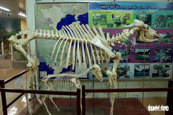 Những động vật bất tử ở Thảo cầm viên Sài Gòn - Ảnh 2.
