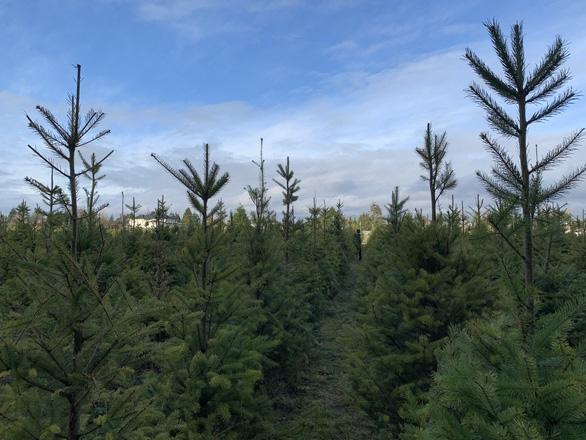Giáng sinh ở xứ người giữa COVID-19 - Ảnh 1.