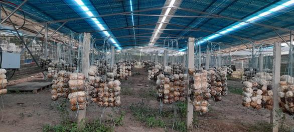 Nhiều vi phạm tại các dự án điện áp mái nông nghiệp - Ảnh 1.