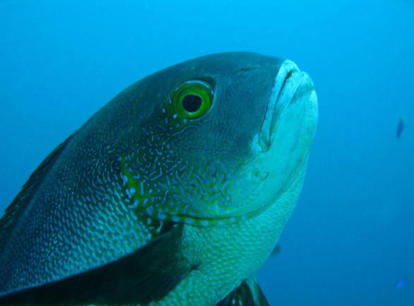 Phát hiện cụ cá thọ nhất thế giới: 81 tuổi - Ảnh 1.