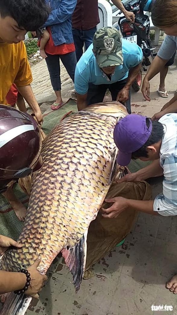 Cá hô trên trăm ký được bán chớp nhoáng tại An Giang - Ảnh 1.