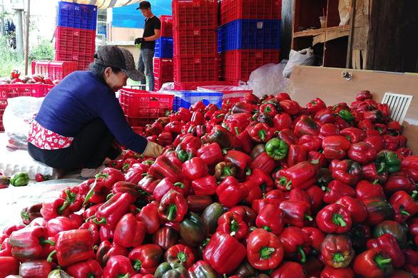 Đổ bỏ nông sản vì bí đường xuất khẩu vì COVID-19 - Ảnh 1.