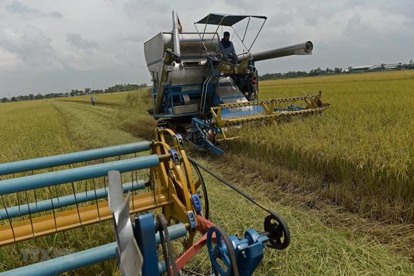 Thái Lan có thể mất ngôi nước xuất khẩu gạo lớn thứ 2 thế giới - Ảnh 1.
