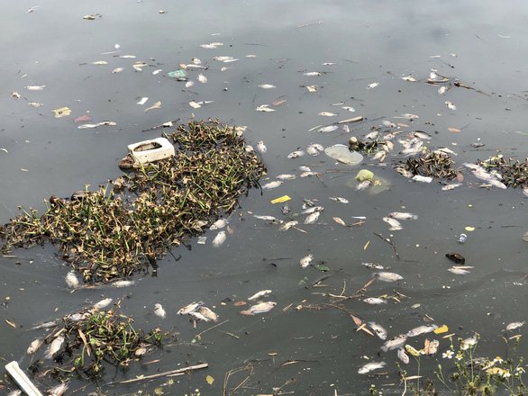 Cá chết dày đặc, bốc mùi hôi thối ngày đêm trên sông Cầu Dứa, Nha Trang - Ảnh 2.
