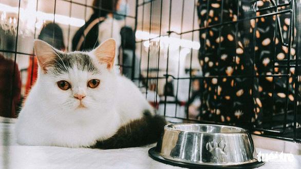 Cuộc thi sắc đẹp của những bé mèo đẹp nhất - Ảnh 5.