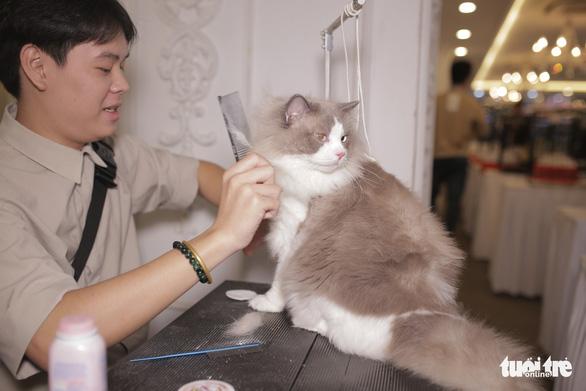 Cuộc thi sắc đẹp của những bé mèo đẹp nhất - Ảnh 9.
