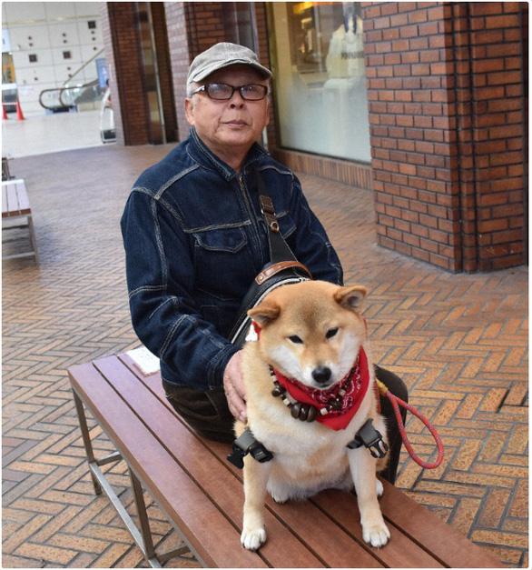 Chó Rin - giống Shiba Inu - kiên nhẫn ngồi chờ chủ 'đốn tim' khách qua đường - Ảnh 1.