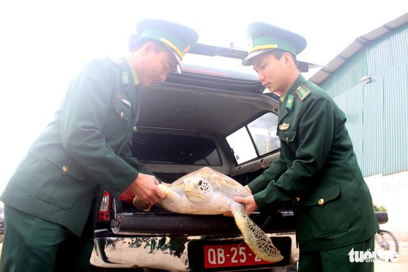Chủ nhà hàng hải sản mua rùa quý nặng 30kg đem thả về biển - Ảnh 4.