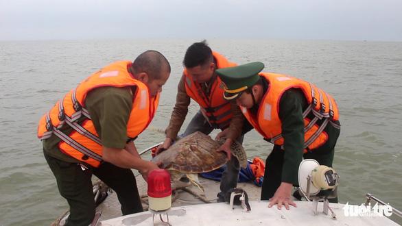 Chủ nhà hàng hải sản mua rùa quý nặng 30kg đem thả về biển - Ảnh 6.