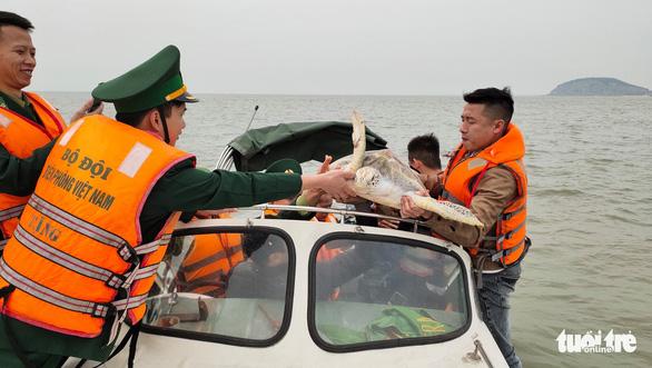 Chủ nhà hàng hải sản mua rùa quý nặng 30kg đem thả về biển - Ảnh 5.