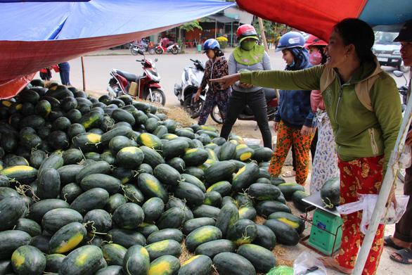 Hàng trăm tấn dưa hấu của nông dân ùn ứ vì dịch corona, thương lái trả giá 1.000 đồng/kg - Ảnh 2.