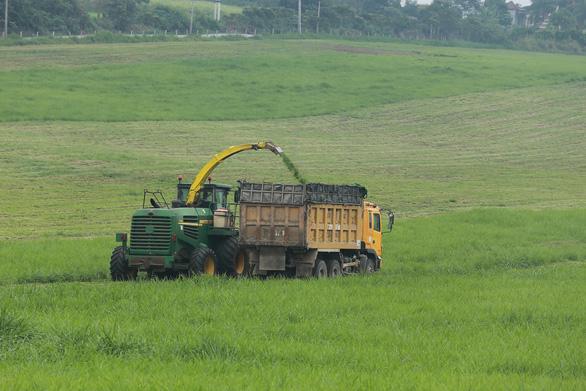 Nhập 4.500 con bò sữa cao sản HF từ Mỹ - Ảnh 5.