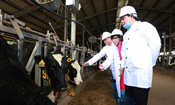 Nhập 4.500 con bò sữa cao sản HF từ Mỹ - Ảnh 1.