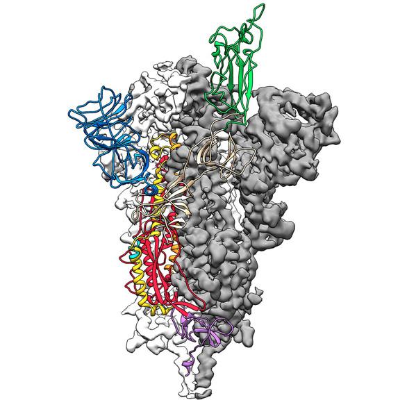 Đột phá nghiên cứu corona: lập bản đồ cấu trúc phân tử 3D virus - Ảnh 1.