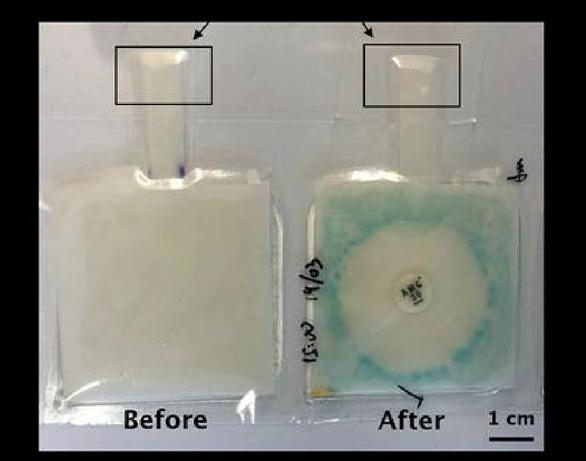 Dụng cụ xét nghiệm chẩn đoán nhanh vi khuẩn làm bằng... giấy - Ảnh 2.