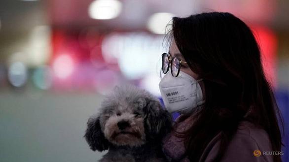 Hong Kong cách ly chó cưng của bệnh nhân nhiễm corona - Ảnh 1.