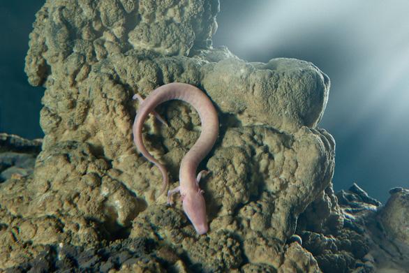 Loài động vật lười nhất quả đất, 7 năm chỉ ở một chỗ - Ảnh 1.