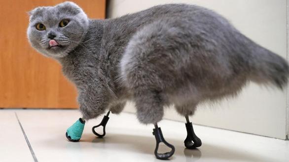 Nga: Mèo mất cả 4 chân vẫn đi lại, leo trèo nhờ 'phép màu' in 3D