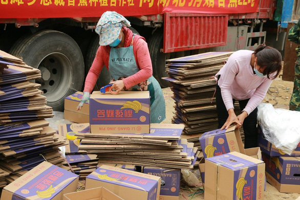 Dân làng gom 22 tấn chuối gửi đến tâm dịch Vũ Hán - Ảnh 4.