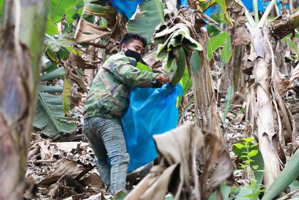 Dân làng gom 22 tấn chuối gửi đến tâm dịch Vũ Hán - Ảnh 3.