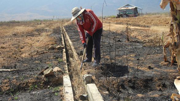 Nam Trung Bộ - Tây Nguyên: Hạn đến sớm, sương muối phá cây trồng - Ảnh 1.