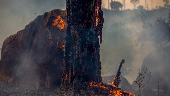 Rừng nhiệt đới không còn khả năng hấp thụ CO2 trong 15 năm tới?