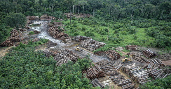 Rừng nhiệt đới không còn khả năng hấp thụ CO2 trong 15 năm tới? - Ảnh 3.