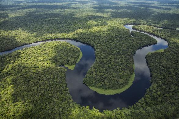 Rừng nhiệt đới không còn khả năng hấp thụ CO2 trong 15 năm tới? - Ảnh 2.