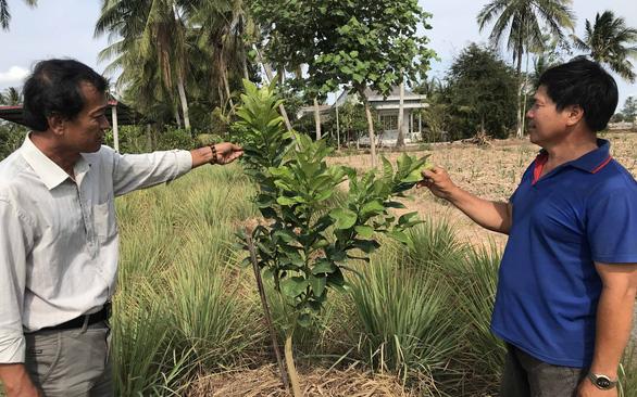 Nông dân miền Tây không ngồi bó tay, trồng cây thích nghi hạn, mặn - Ảnh 1.