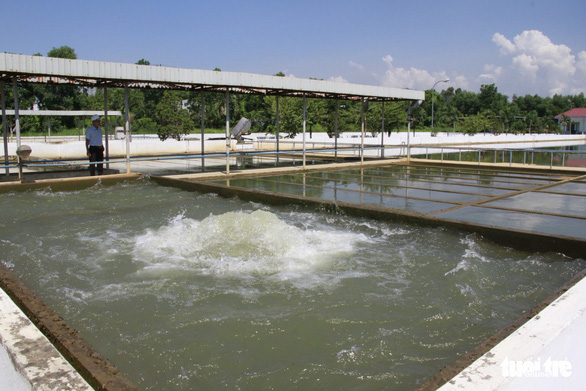 Mặn vượt đỉnh 2019, Đà Nẵng yêu cầu thủy điện vận hành xả nước - Ảnh 1.