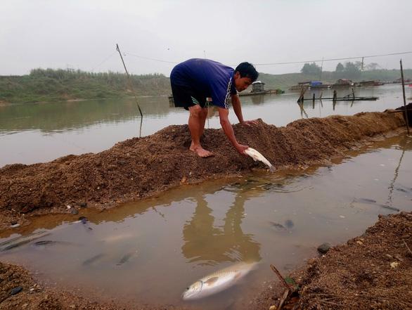 Cá chết hàng loạt trên sông Chu - Ảnh 1.