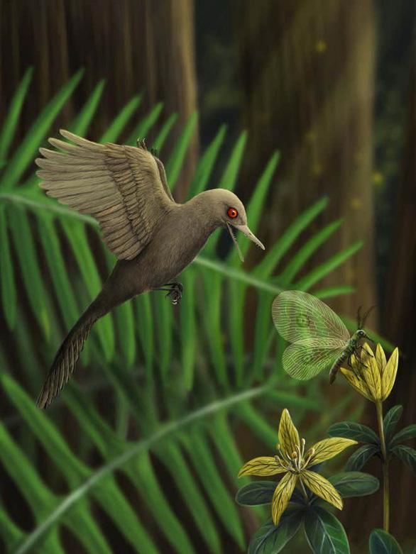 Loài khủng long chỉ bằng con chim ruồi, nhỏ nhất thế giới - Ảnh 1.