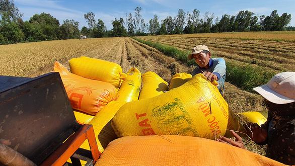 Việt Nam giữ sản lượng 22 triệu tấn gạo - Ảnh 1.