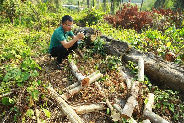 Thanh tra đề nghị kỷ luật tập thể, cá nhân đốn rừng trồng dược liệu - Ảnh 1.