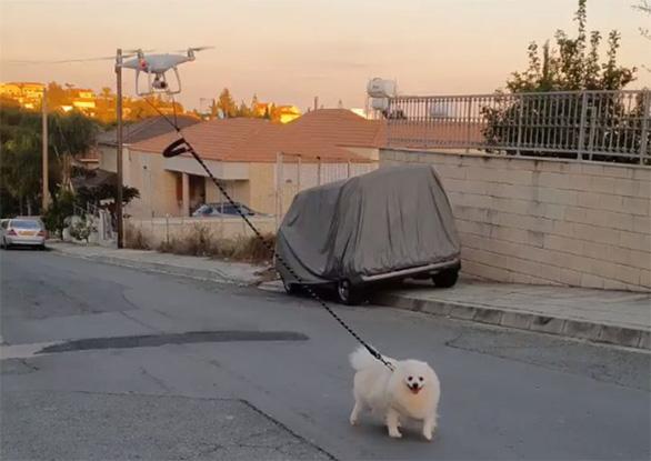 Chủ bị cách ly vì COVID-19, chó đi dạo cùng drone - Ảnh 1.