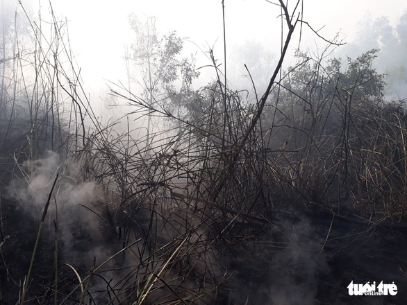 Cháy lớn tại bãi cỏ và vườn tràm khói mù mịt bao trùm cả khu vực - Ảnh 3.