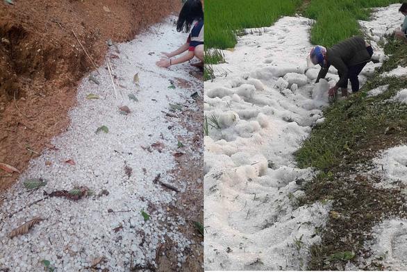 Mưa đá dày đặc, phủ trắng bờ ruộng lúa tại Điện Biên - Ảnh 4.