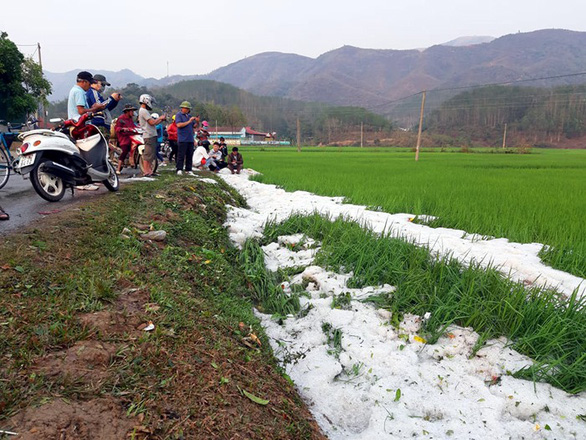 Mưa đá dày đặc, phủ trắng bờ ruộng lúa tại Điện Biên - Ảnh 2.